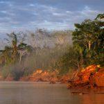 Paesaggio fluviale amazzonico all'Alba, la nebbiolina gioca un ruolo fondamentale nella composizione, ma anche il porre su un lato una parte della foresta non annebbiata