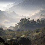 La nebbia mattutina o forse il fumo di un grosso falò possono risultare fotogenici